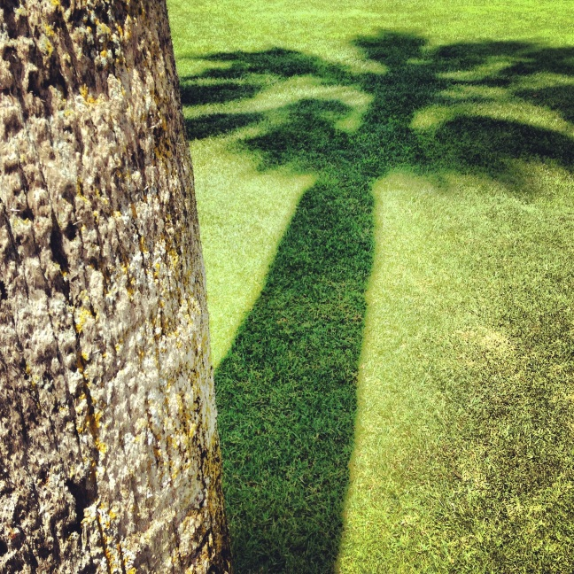 expo park palm
